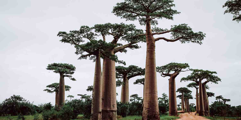 Background image of Antananarivo