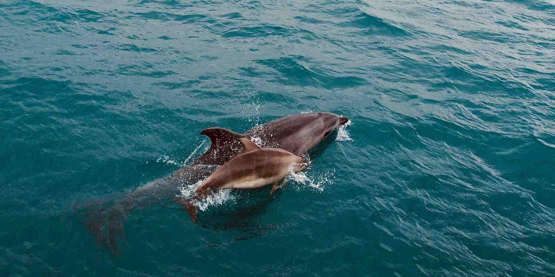 Background image of Bay Islands
