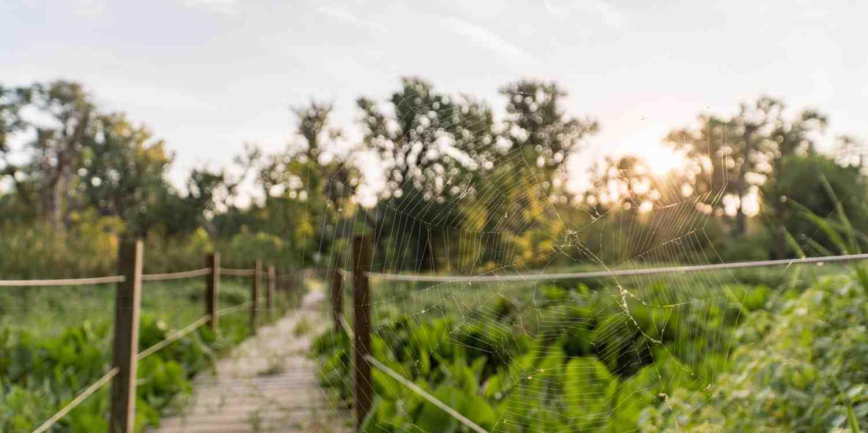 Background image of Bellevue