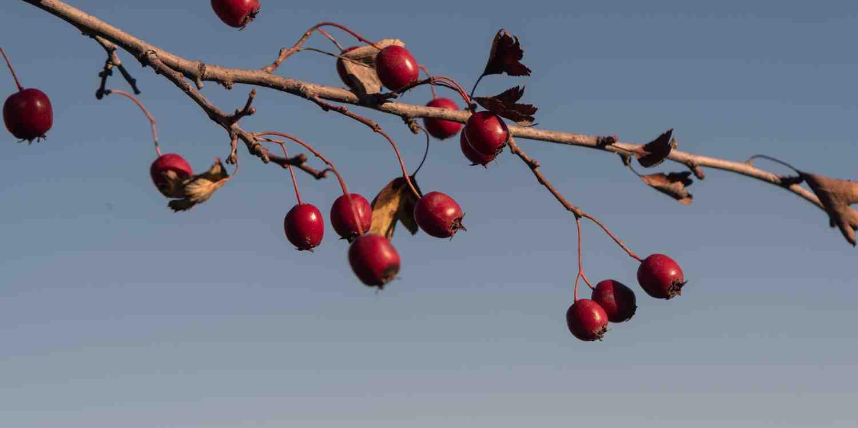 Background image of Gori