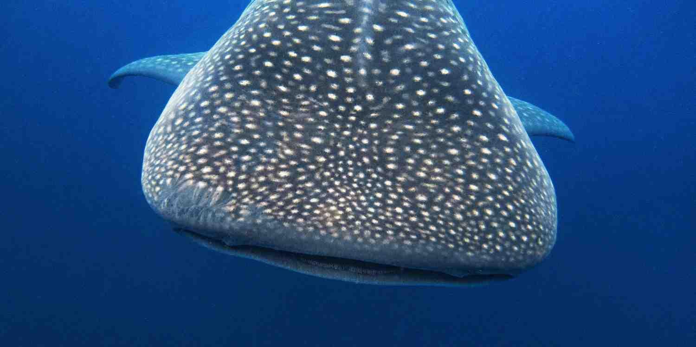 Background image of Isla Mujeres