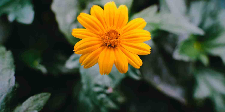 Background image of Jiangmen