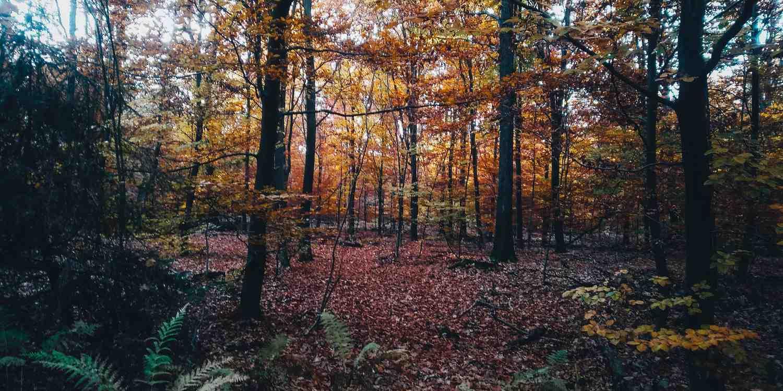 Background image of Katowice