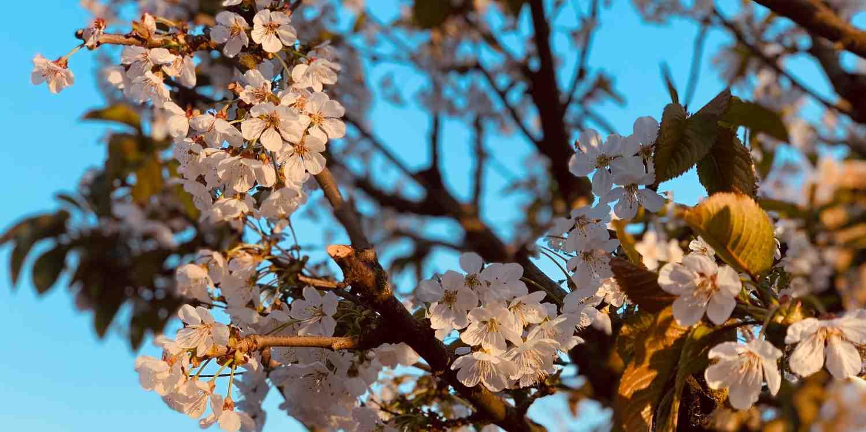 Background image of Kisangani