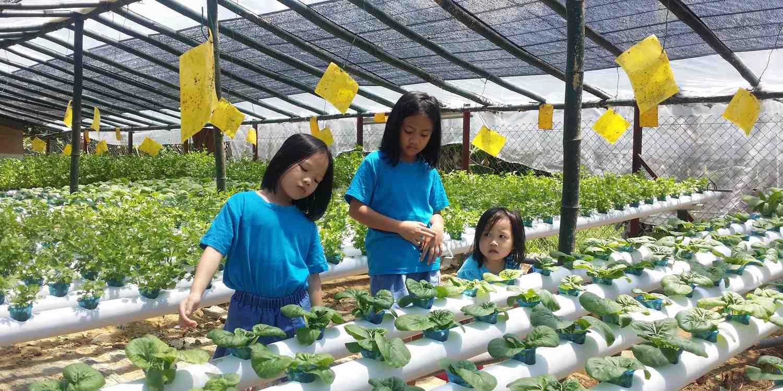 Background image of Kota Kinabalu