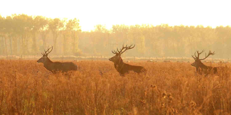 Background image of Lelystad