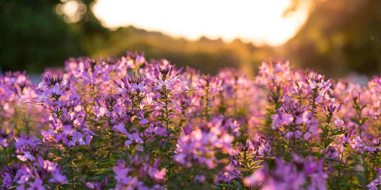 Background image of Lexington