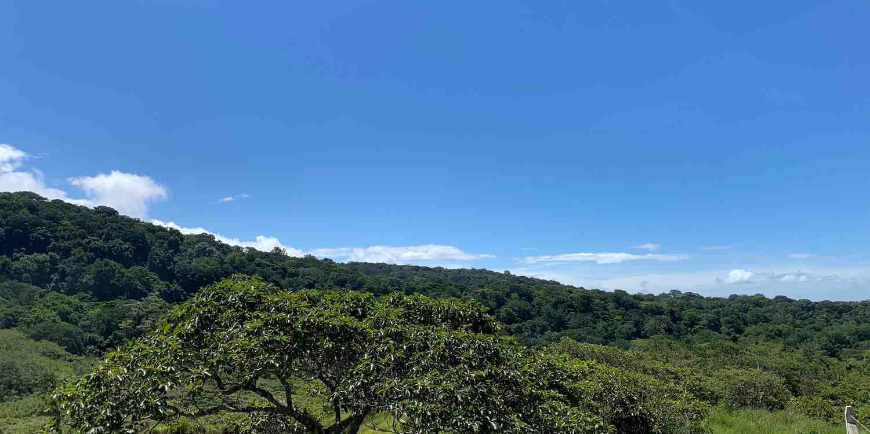 Background image of Liberia