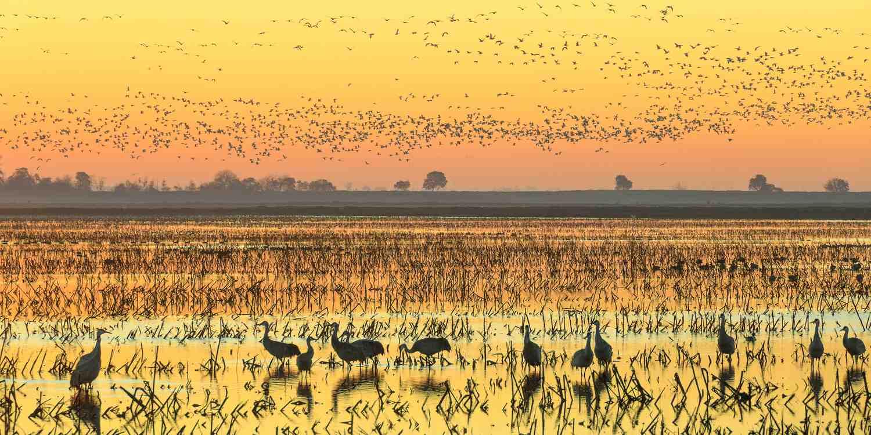 Background image of Lodi