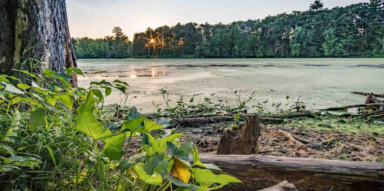 Background image of Nashua