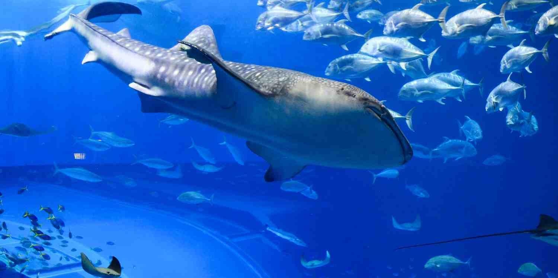 Background image of Okinawa City