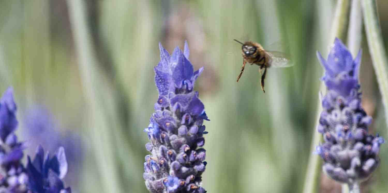 Background image of Saint Helier