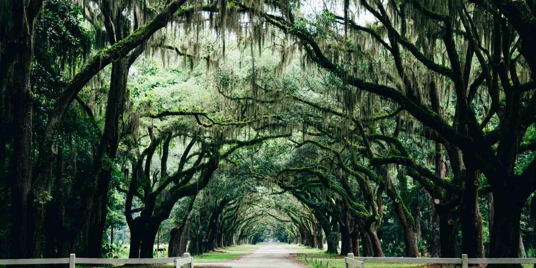 Background image of Savannah