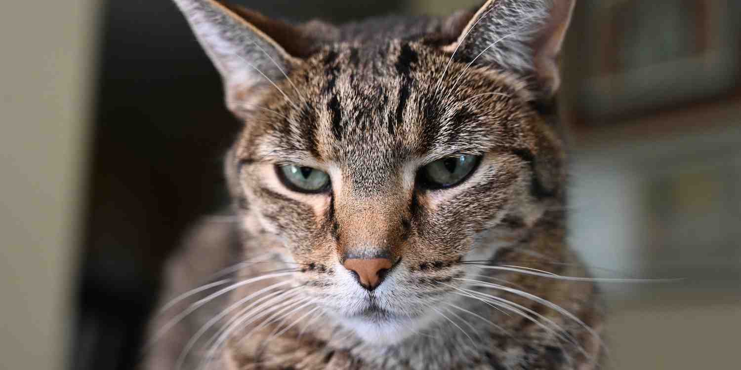 Background image of Temple
