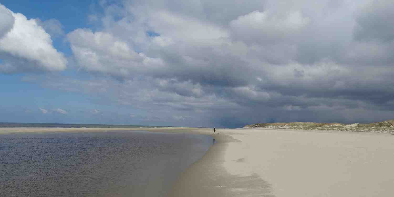 Background image of Texel