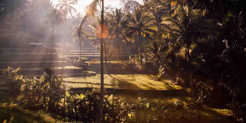 Background image of Ubud