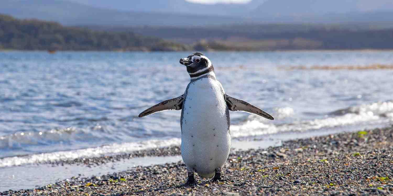 Background image of Ushuaia