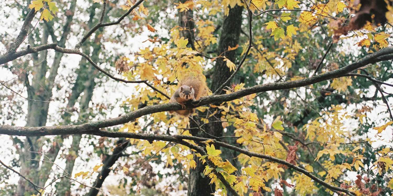 Background image of Bloomington