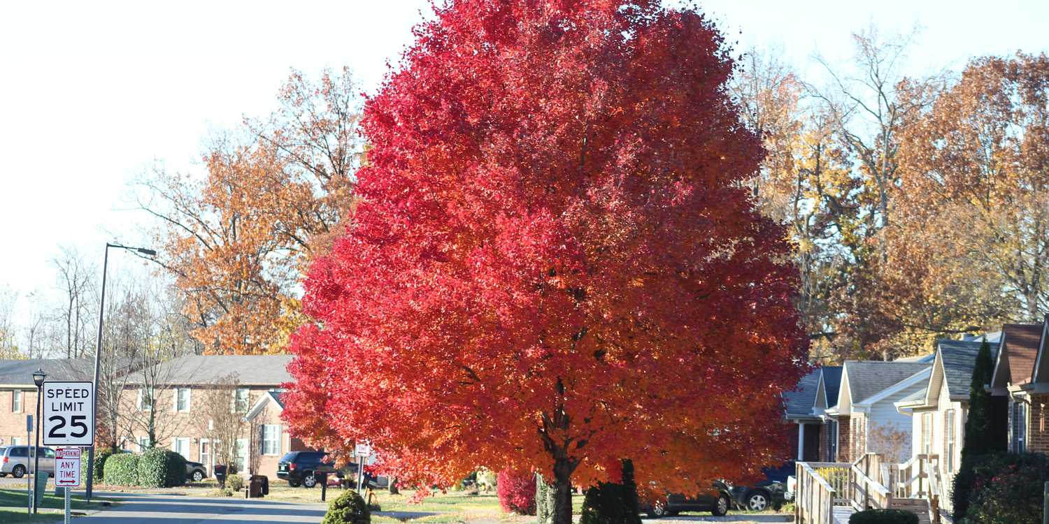 Background image of Louisville