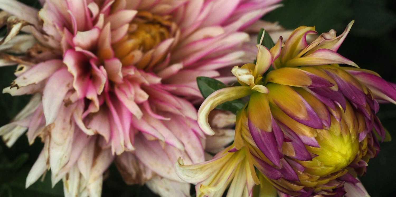 Background image of Manhattan