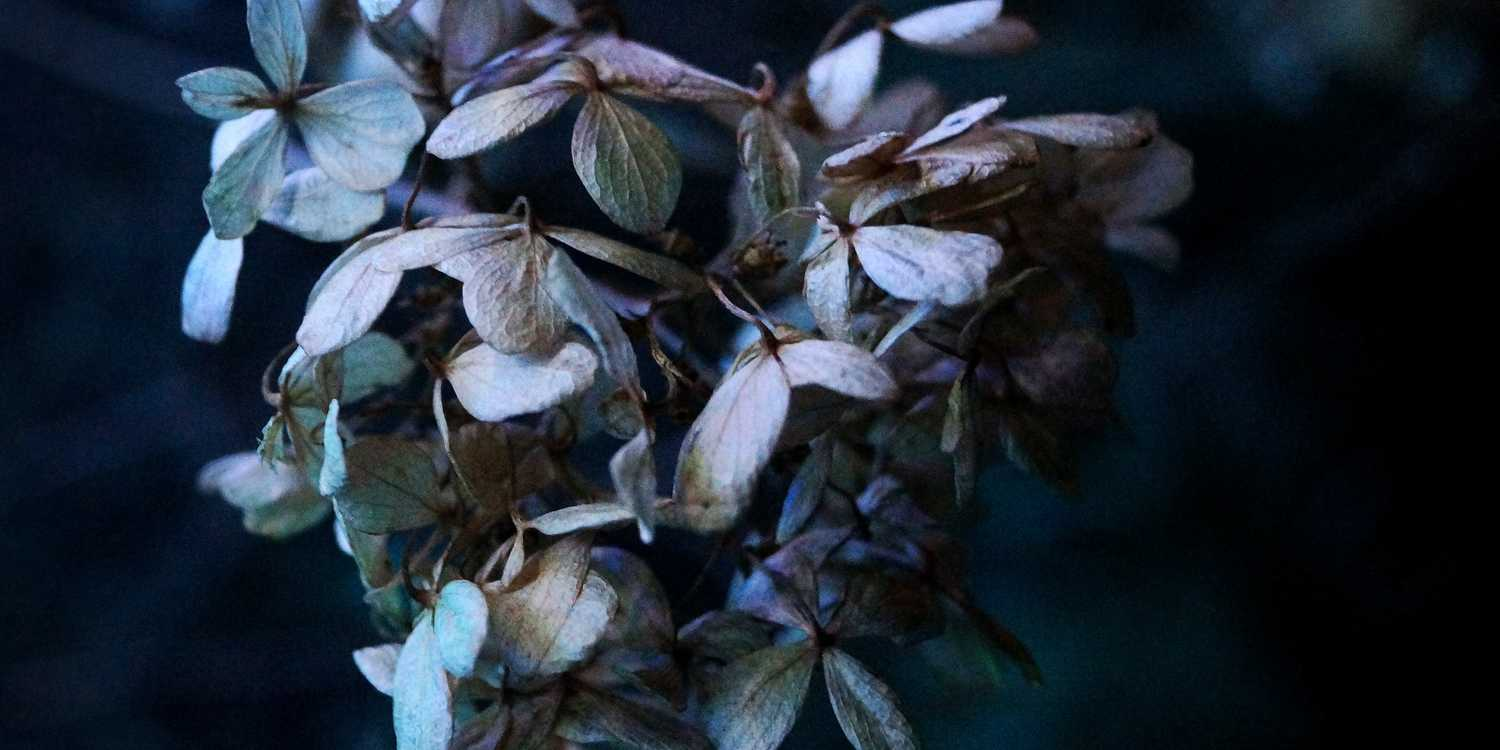 Background image of St. Louis